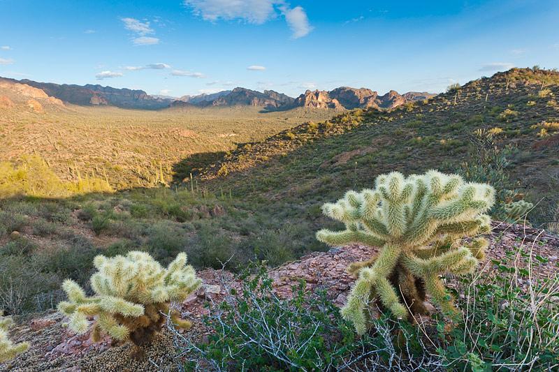 Superstition Wilderness Cacti and Landscape