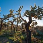 Backlit Cacti in Saguaro National Park