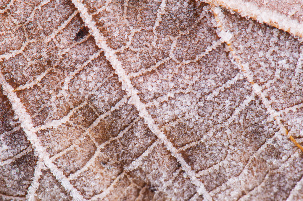 Close-up picture of frost on fallen leaf